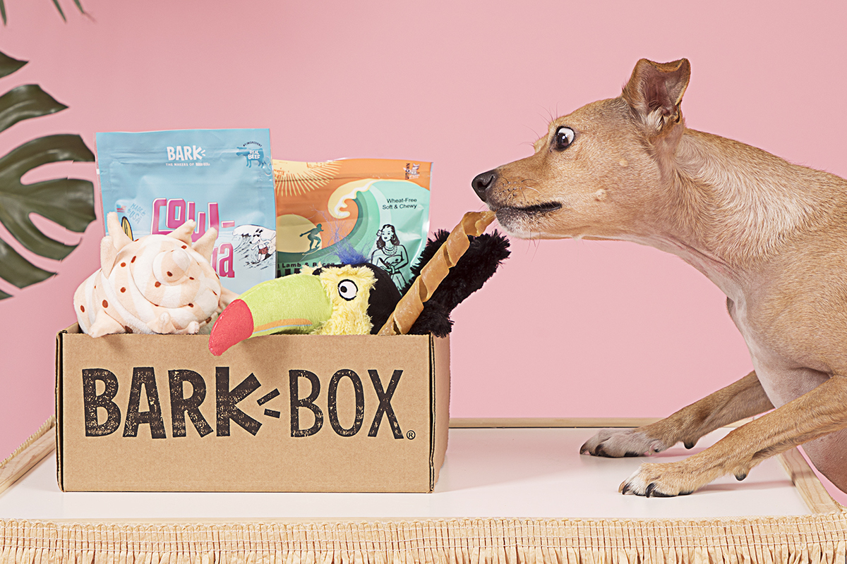 BarkBox Reviews 2021 - Why Do All The Pups Love It?