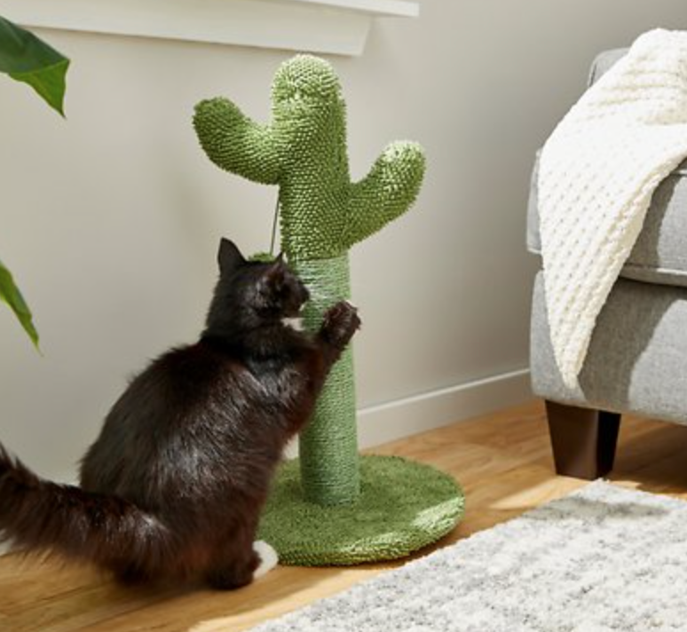 Chewy cat accessories